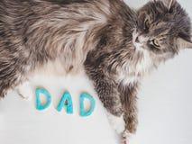 Söt gullig kattunge och ordet FARSA Fotografering för Bildbyråer