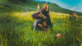 Söt hund på gräsmattan Arkivfoton