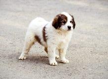 söt hundvalp royaltyfria foton