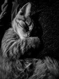 Söt katt royaltyfri foto