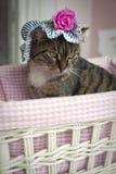 söt katt Royaltyfria Bilder