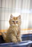 söt katt Royaltyfri Fotografi