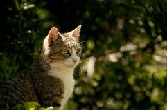 söt katt Arkivbild