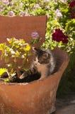 söt katt Royaltyfri Bild
