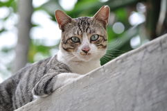 Söt katt Arkivfoton