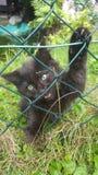 Söt katt arkivfoto