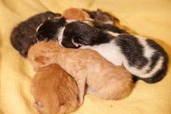 Söt kattfamilj - precis nyfödda kattungar med en moderkatt Röda svartvita kattungar Fotografering för Bildbyråer