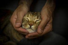 Söt kattsömn Arkivfoto