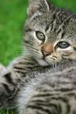 Söt kattunge royaltyfri bild