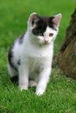 söt kattunge Royaltyfri Fotografi