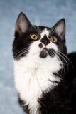 söt kattunge Arkivbilder