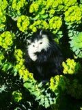 Söt kattunge i gräs arkivfoto