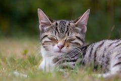 Söt kattunge i gräset arkivbild