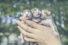 Söt kattunge som tar en ta sig en tupplur Arkivfoto