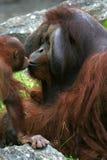 söt kyss Arkivfoto