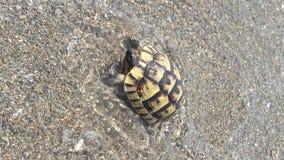 Söt liten sköldpadda royaltyfria bilder