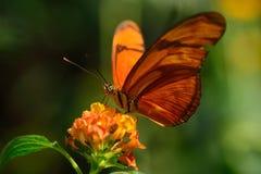 Söt nektar Royaltyfria Bilder
