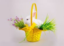Fluffig vitkanin i en korg med blommor Fotografering för Bildbyråer
