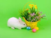Fluffig kanin och blommor på gräsplan Royaltyfria Bilder