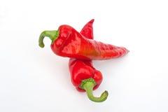 Söt peppar Fotografering för Bildbyråer