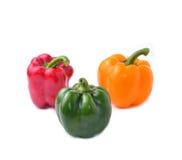 Söt peppar med vit bakgrund royaltyfri foto