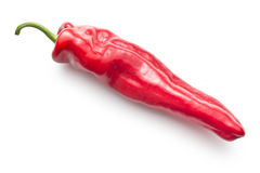 Söt röd peppar Royaltyfri Foto
