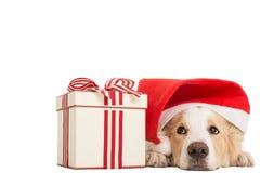 Söt Santa Claus hund för xmas-tid arkivfoton