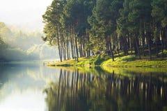Söt sjö Fotografering för Bildbyråer