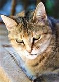 Söt strimmig kattkatt i reflekterande moode arkivbilder