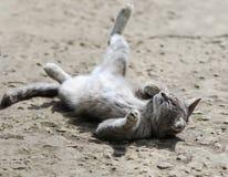 Söt strimmig kattkatt som ligger och tycker om playfully de roliga benen för sol Fotografering för Bildbyråer