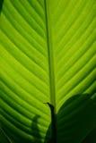 söt textur för leaf Fotografering för Bildbyråer