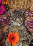 Söt 12 veckor gammal kattunge med en blomma Royaltyfri Bild