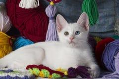 Söt vit kattunge Arkivfoton