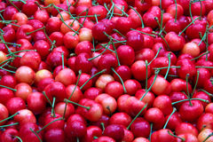 söta Cherry Royaltyfri Fotografi