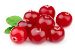 söta cranberriesleafs Royaltyfri Foto