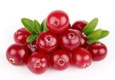 söta cranberriesleafs Arkivbilder