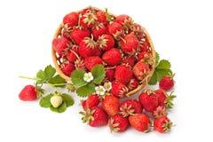 Söta doftande jordgubbar i en vide- korg Arkivbilder