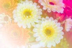 Söta färgrika plast-blommor Royaltyfri Fotografi