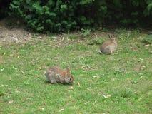 söta kaniner Royaltyfria Bilder