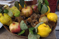 söta kastanjpomegranatesquinces Fotografering för Bildbyråer