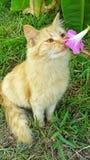 Söta lukter Royaltyfri Fotografi