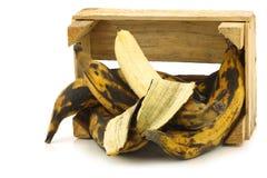 Söta mogna stekheta bananer (plantainbananer) Fotografering för Bildbyråer
