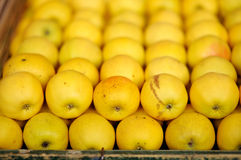 Söta nya bio äpplen Royaltyfri Foto