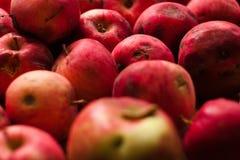 Söta nya röda äpplen Royaltyfri Foto
