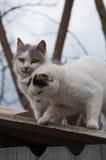 Söta par av katter på ett tak Royaltyfria Bilder