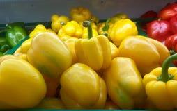 Söta peppar av yelloen, söt yello för nya grönsaker, Ubonratchat Fotografering för Bildbyråer