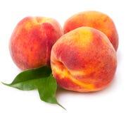söta persikor Fotografering för Bildbyråer