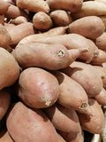söta potatisar Royaltyfria Bilder