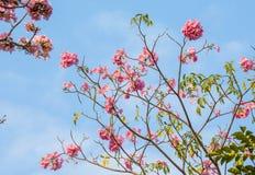 Söta rosa färger Royaltyfria Foton