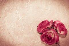 Söta rosor på mullbärsträdpapper Arkivfoto